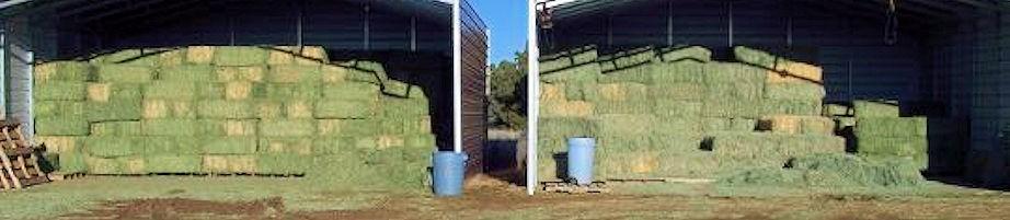 Nigerian Dwarf Goats Hay